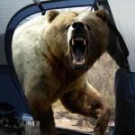 Urs la cort